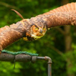 Birds of Prey Shows in North Georgia